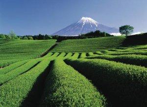 画像1: ふじやま茶 (1)