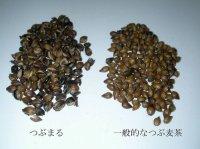 画像3: 究極の麦茶 「つぶまる」 (煮出し用・ティーパック)